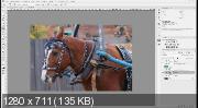 Photoshop и Camera Raw. Обработка фотографий (2017) HDRip
